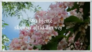 citat-maria-161114